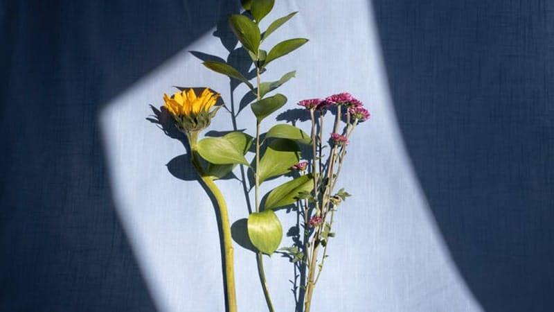 Bunga Matahari dan Krisan
