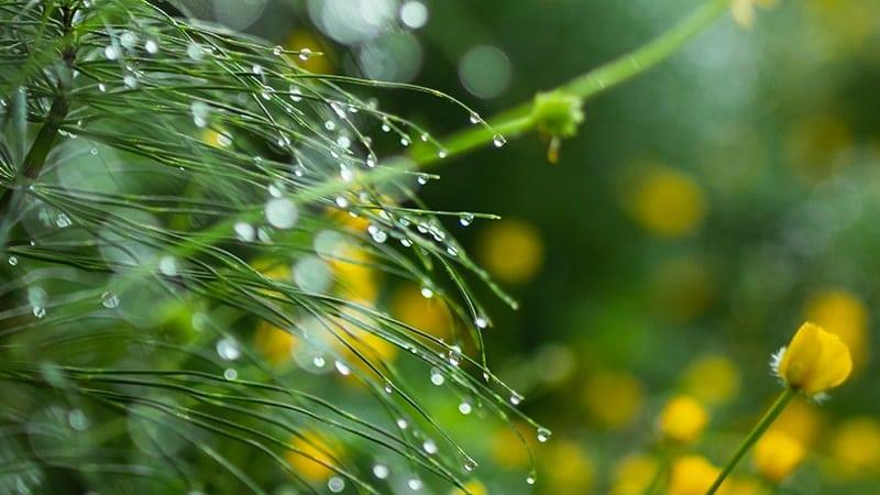 Kata-Kata Embun Pagi - Di Rumput