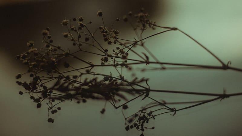 Kata-Kata Pengorbanan Cinta yang Sia- Sia - Bunga Kering Tergeletak
