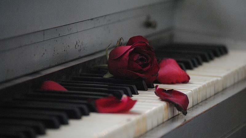 Kata-Kata Sedih - Mawar yang Hancur