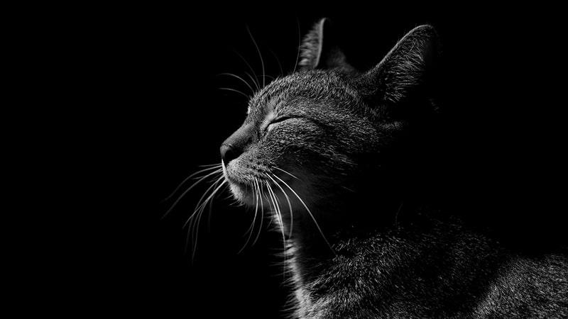 Cerita Rakyat Jambi Ibu Kandungu Seekor Kucing - Kucing