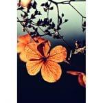 00 Cover Kata-Kata Mutiara Indah tentang Bunga
