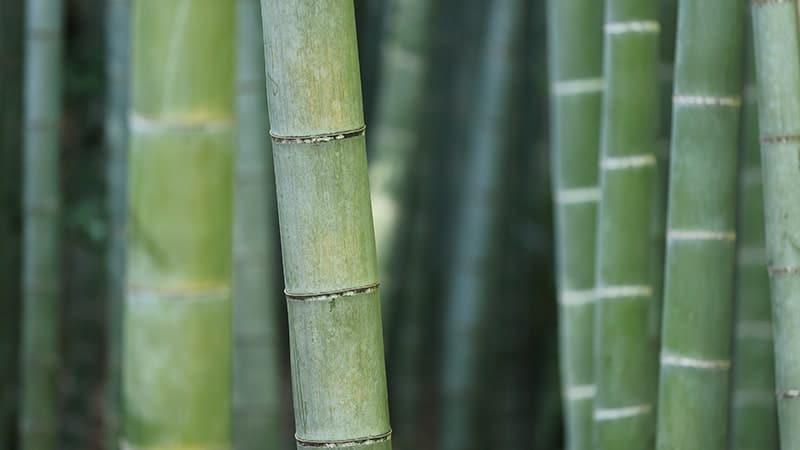 Asal Mula Gunung Mekongga - Bambu