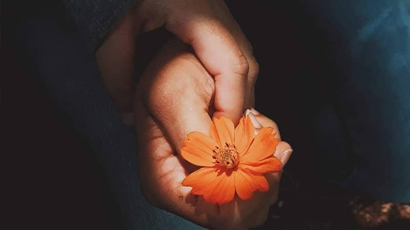 Ada Bunga Orange