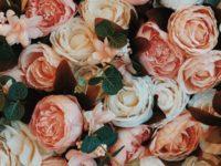 Kata-Kata Kangen Seseorang tapi bukan Pacar - Bunga Mawar