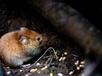 Cerifa Fabel Tikus dan Ular - Gambar Utama