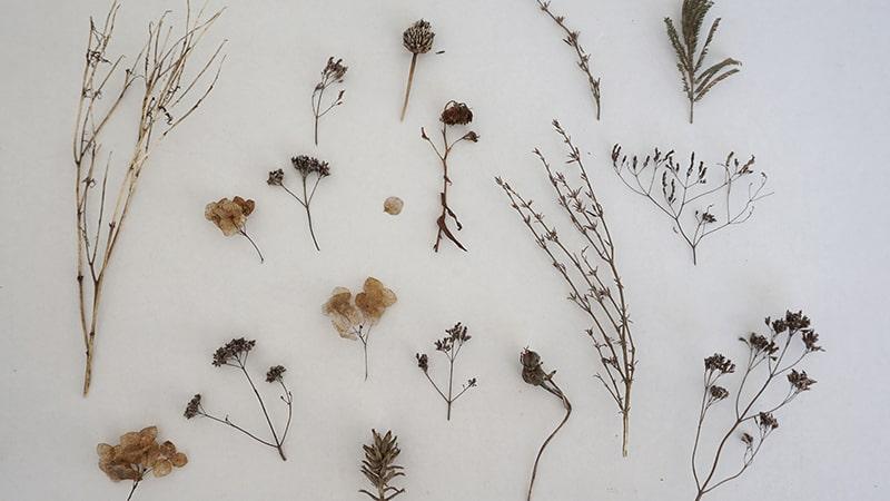Cerita Bunga Paling Berharga - Beragam Bunga Kering
