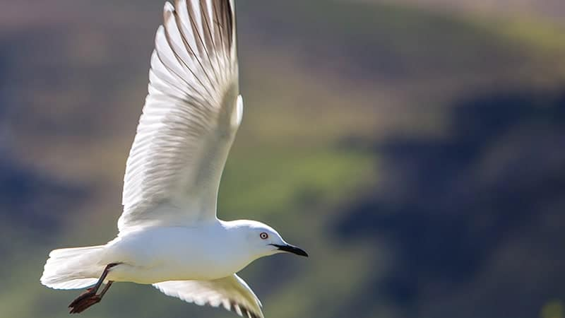 Kata-Kata Sabar Ada Batasnya - Burung Terbang