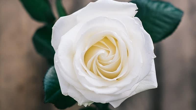 Kata-Kata Wanita Sholehah - Bunga