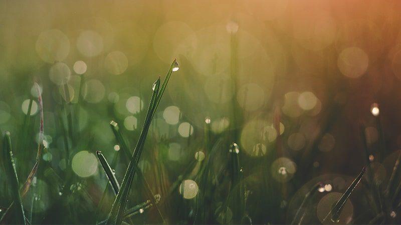 Kata-Kata Mutiara Hikmah Kehidupan - Embun di Rumput