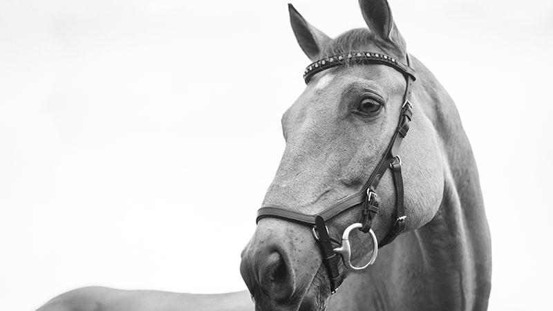 Dongeng Kuda dan Keledai - Kuda