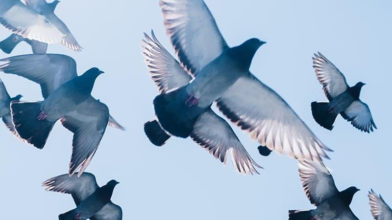 Caption Bucin Singkat - Burung Terbang