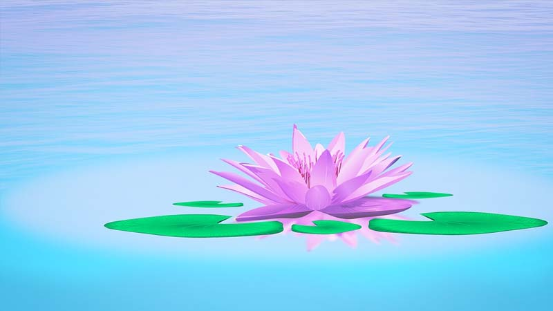 Asal Usul Bunga Teratai - Teratai Ungu