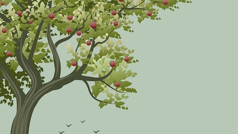 Legenda Bunga Pohon Apel - Ilustrasi Pohon Apel
